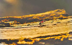 【心靈剪影】人蟻