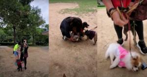 西貢現「狗咬狗」命案  女狗主涉虐畜遭重案拘捕