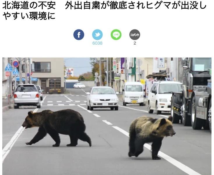 北海道若啟動緊急事態 憂萬人空巷熊出沒
