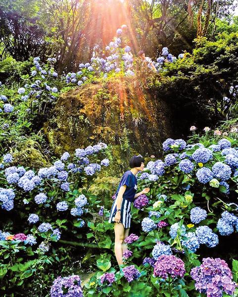 台灣春季最亮眼 花團錦簇陽明山