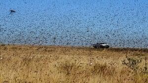 蝗蟲敲響中國大門!上海現蹤 規模恐超20倍