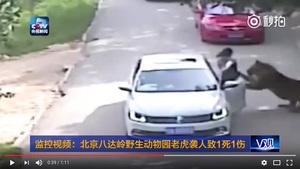 北京老虎襲人事件 傷者家屬被曝最新消息