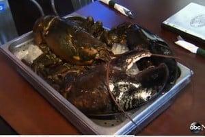 好險!美一隻百歲15磅老龍蝦差點成盤中餐
