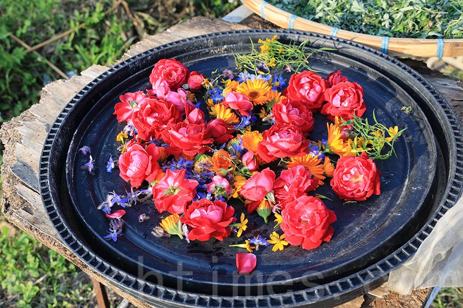 Yan種植的食用花,將曬乾製作花茶和手工皂。(陳仲明/大紀元)