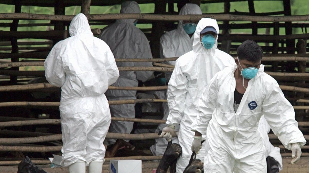 中共農業農村部稱,非洲馬瘟疫情威脅中國,此疫情病死率高達95%。示意圖(AFP via Getty Images)
