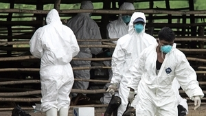 又一致命疫情威脅中國 病死率高達95%