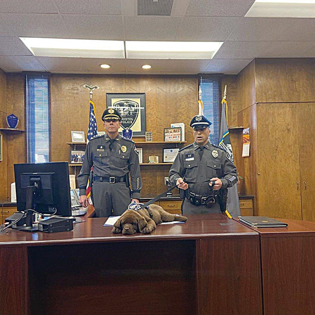 美國羅德島州布里斯托警察局的安慰犬布洛迪在自己的宣誓就職典禮上睡著了。(Bristol Police Department)