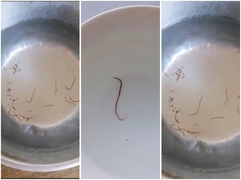 【一線採訪】中國東北某村莊自來水驚現寄生蟲 官方置之不理
