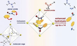 分子層面「壓力鍋」幫助分解蛋白質