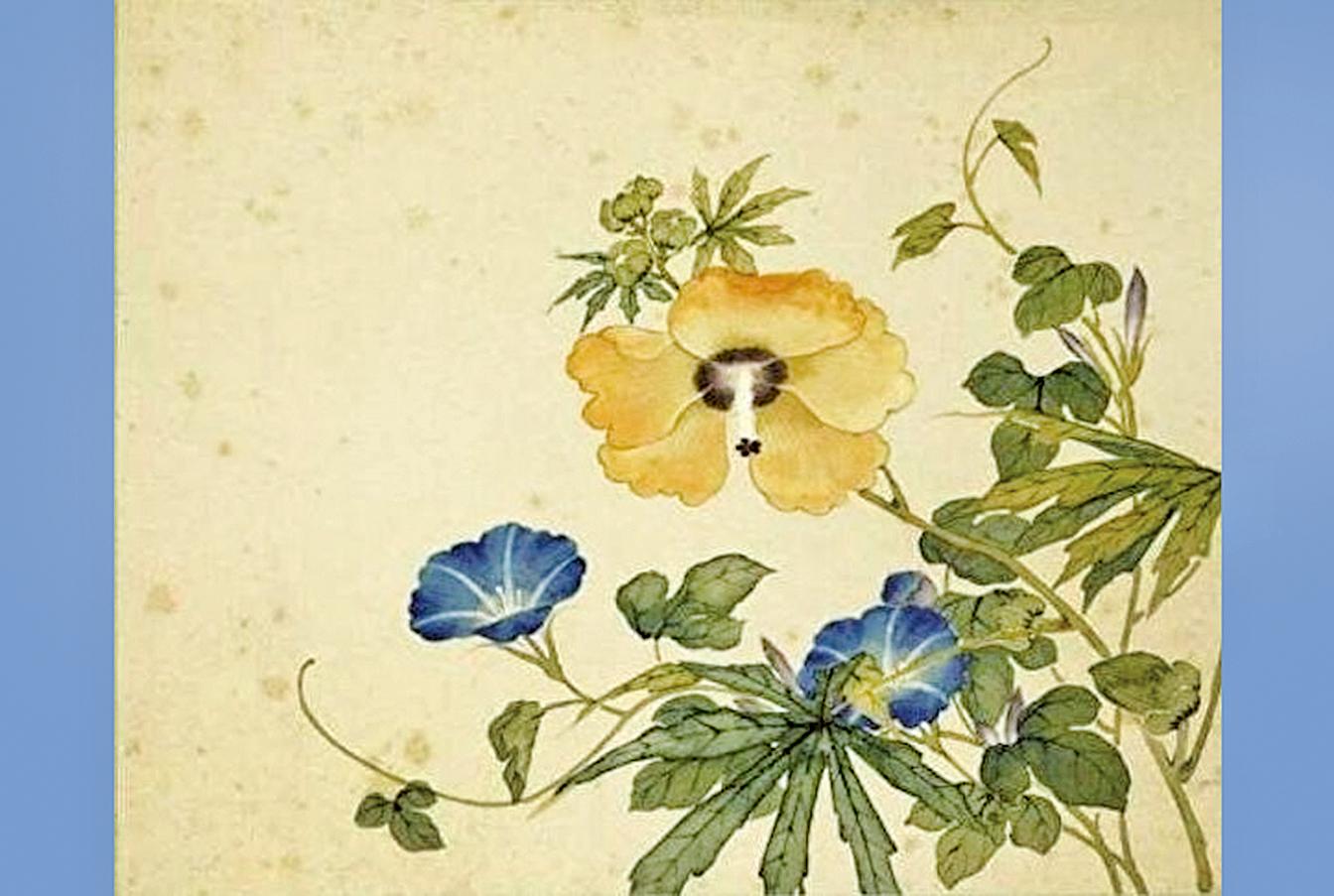 《清沈振麟繪十二月花神 冊.秋葵牽牛花》(國立故宮博物院藏)