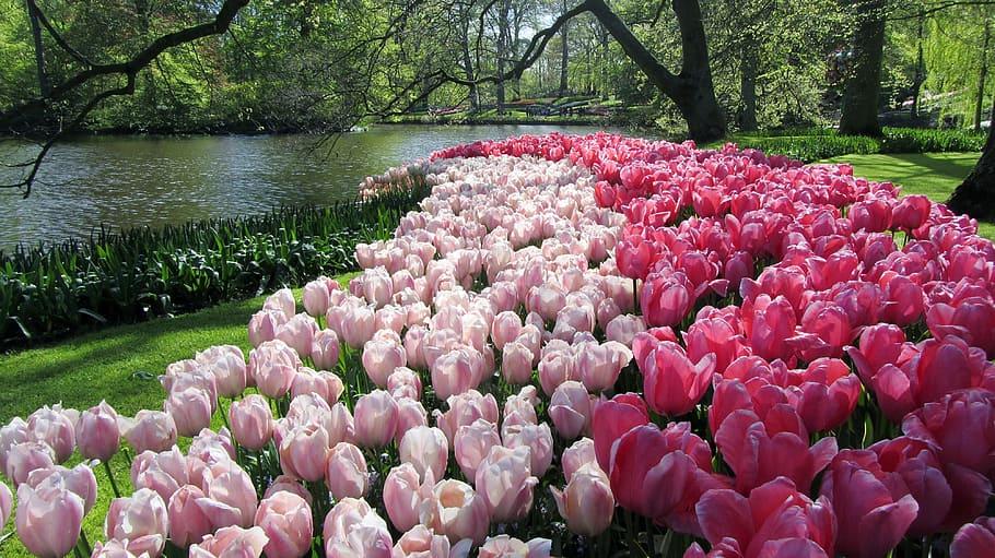 (全部圖片)被封為「世界最美花園」的荷蘭庫肯霍夫花園(Keukenhof)。(Pxfuel)