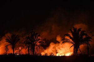 疫情加劇濫伐 巴西派兵保護亞馬遜雨林