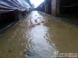 湖北近萬頭豬被淹死 數十萬斤烏龜逃脫