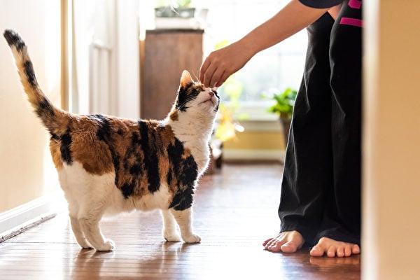 研究:中共病毒可「貓傳貓」但均未出現重症