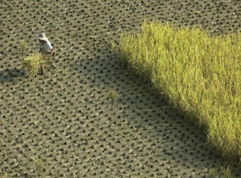 近日,中共要求貿易公司和食品加工企業增加大豆等農作物庫存加速採購,被指為疫情擴散做準備。(法新社)