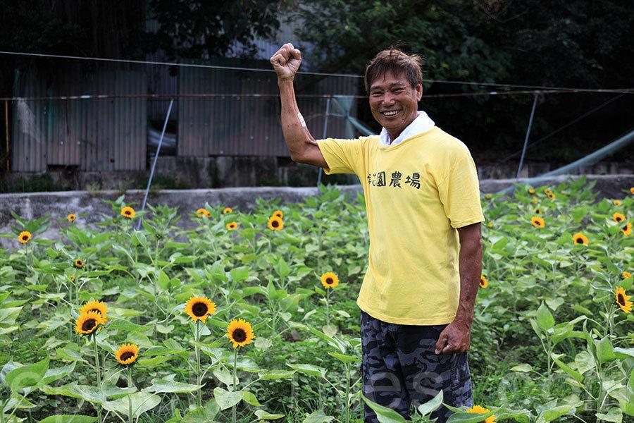 太陽花蓮花盛放 元朗信芯園「太陽花節」本周末開始