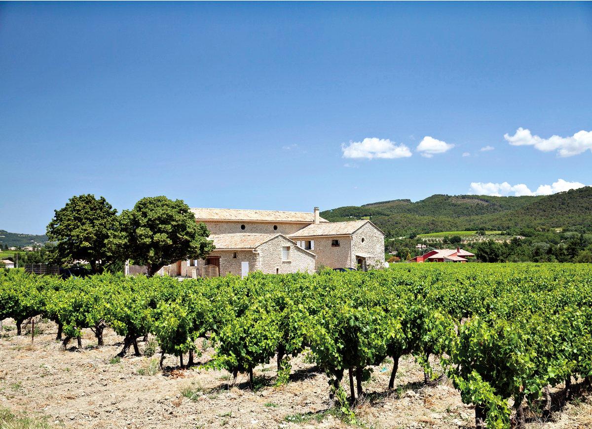 酒客只要啜飲露西酒,普羅旺斯的葡萄園風情彷彿近在眼前。