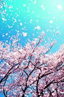 【浮生行呤】春風