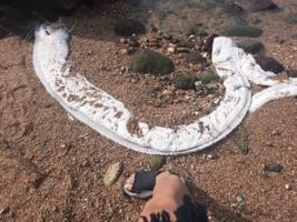 「地震魚」屍體驚現南丫島 網民憂天災將至