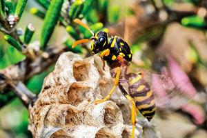 不用化學製品 也能避免黃蜂在家築巢