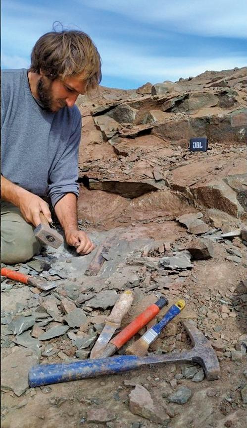 阿根廷發現巨型恐龍化石