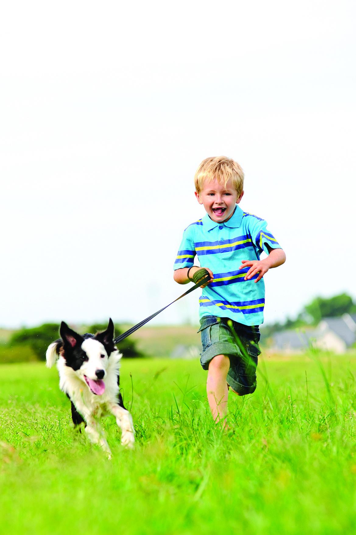 邊境牧羊犬充滿活力,心思細膩且精力旺盛。