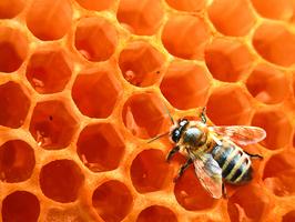 「環保蜂蠟紙」代替塑料 有機 美麗 可用一年