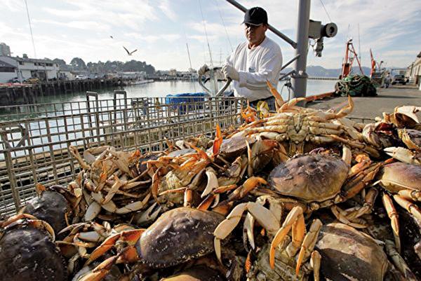 圖為三藩市捕蟹人,每年冬天是當地捕蟹季的開始。(Justin Sullivan/Getty Images)