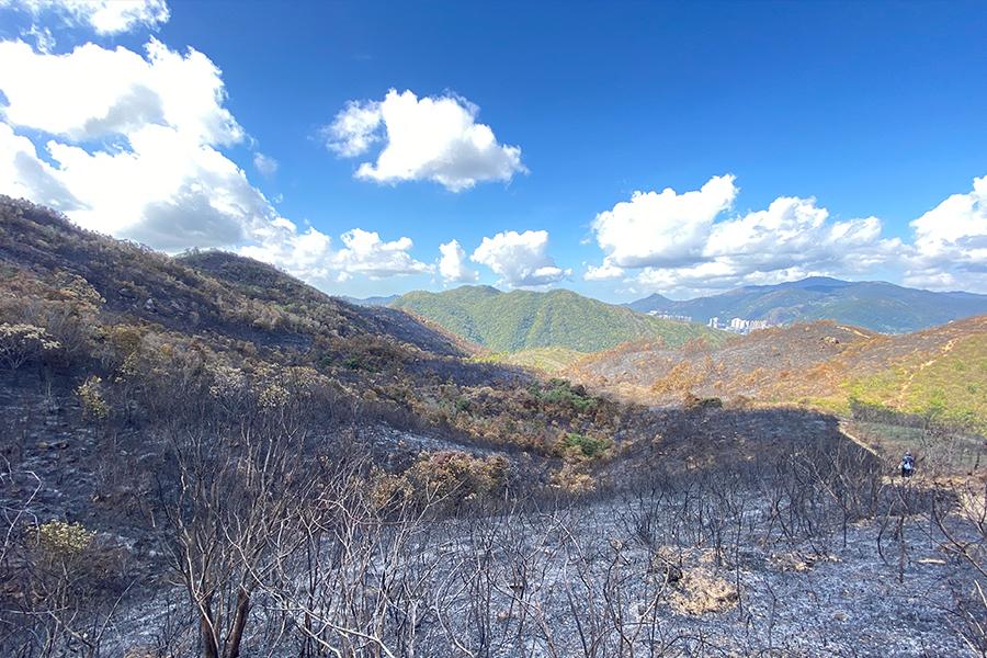 山火後的鹿巢山。(受訪者提供)