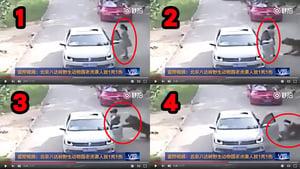 北京虎咬人事件 傷者父稱不在乎罵聲再遭嗆