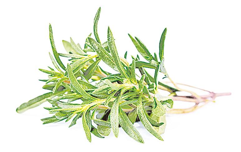即使你的香草是種在室內,也必須清潔乾淨。