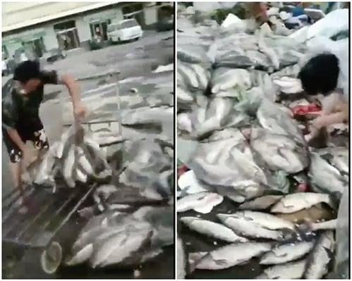 北京疫情三文魚躺槍 各地樣本檢測均為陰性