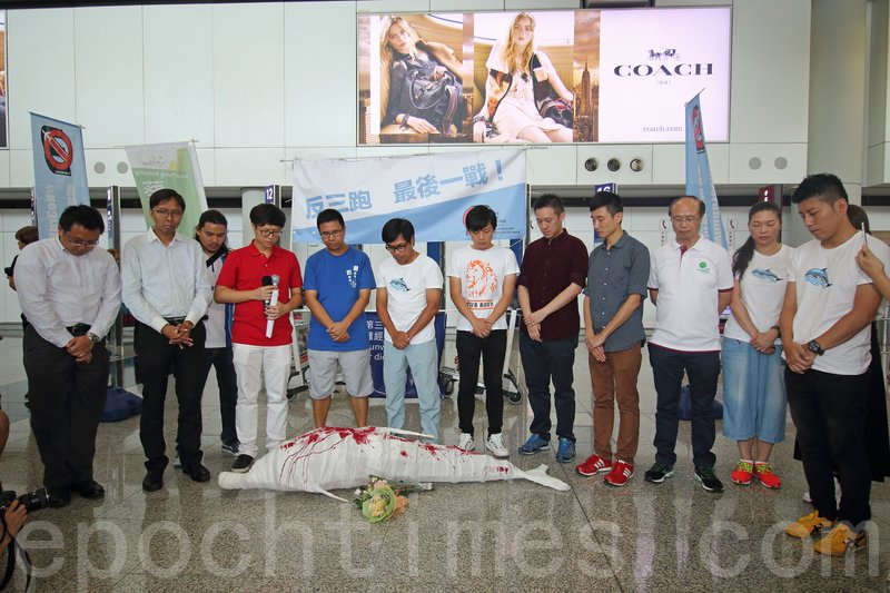 示威者之後高舉一隻染血的中華白海豚模型,圍繞機場遊行一圈,悼念受工程影響而死去的中華白海豚。(蔡雯文/大紀元)