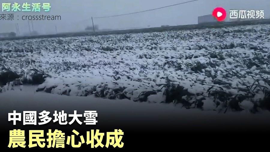 黨媒報小麥「豐收」畝產1700斤 評論區意外「翻車」