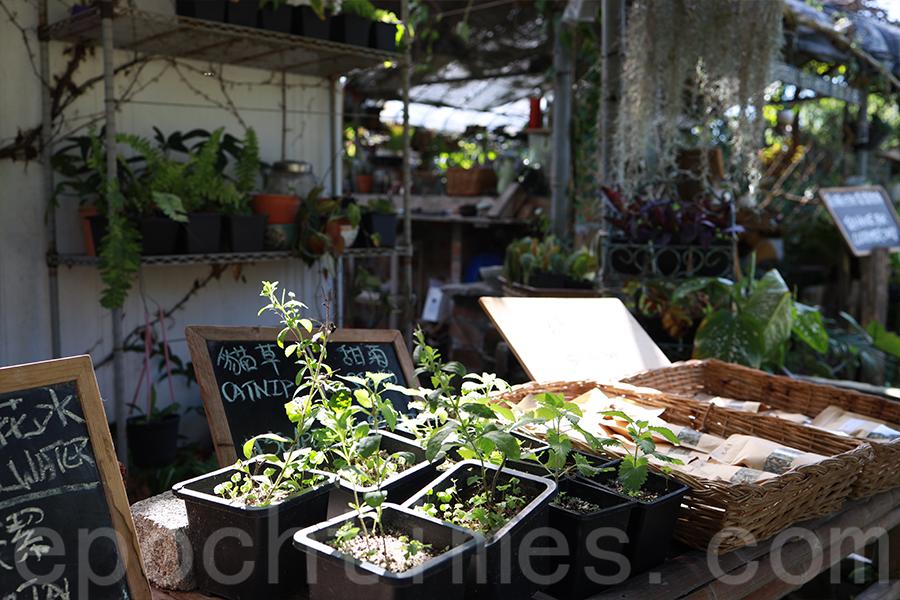 Gary認為天然的植物能夠帶給人健康,使用自家種的香草製作各類產品。(陳仲明/大紀元)