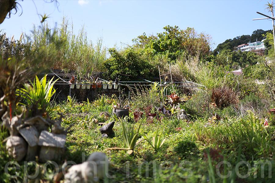 香草原中種有各式各樣的香草。(陳仲明/大紀元)
