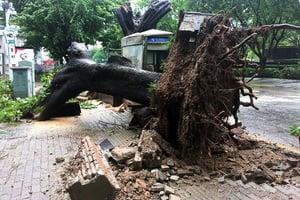 組圖:「妮妲」橫掃東南沿海 大樹連根拔起
