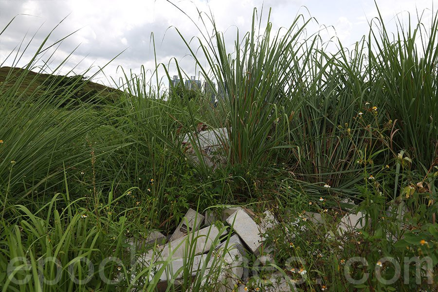 「特殊農地復耕計劃」中的復耕農地「缸窰」被非法傾倒泥頭及建築廢料。