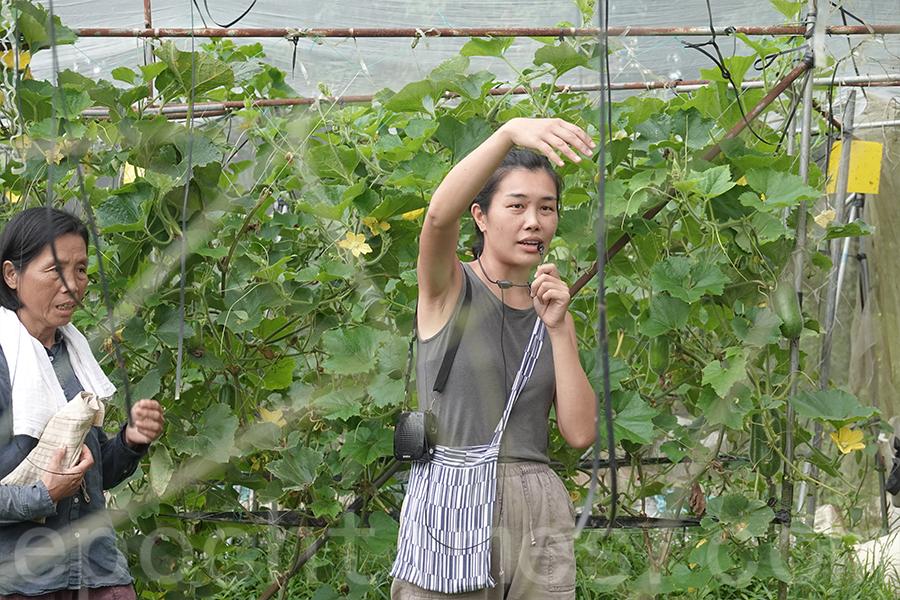 馬寶寶社區農場負責人區晞旻帶領眾人走入農田,講解農夫的日常生活。(曾蓮/大紀元)