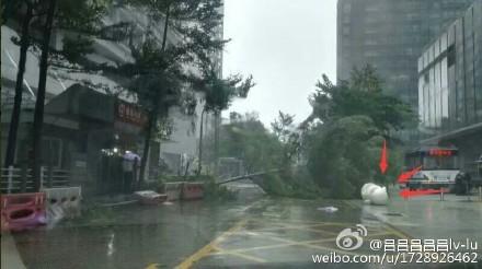 「妮妲」於2日凌晨在廣東深圳登陸,廣州市內樹木被大風刮倒。(網絡圖片)