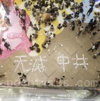 民眾七一上街抗惡法 「快慢必」被捕 銅鑼灣街頭貼滿「天滅中共」
