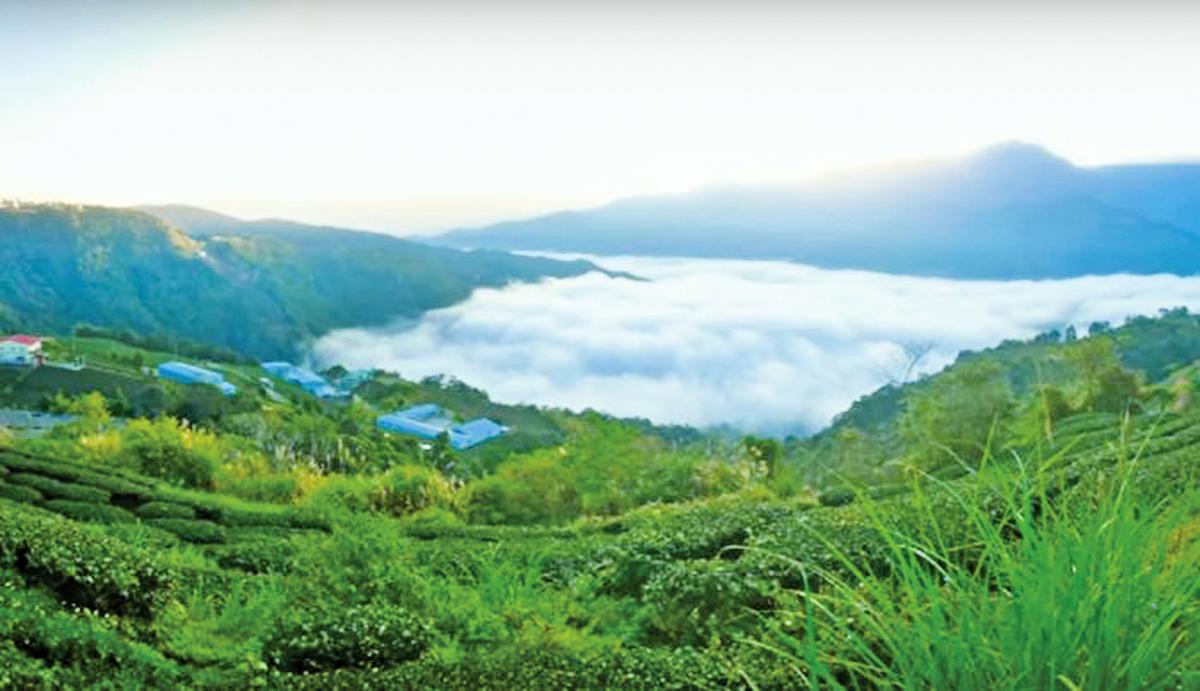 武界的美,美在她霧靄煙嵐常年繚繞,也因此被稱為「雲的故鄉」。