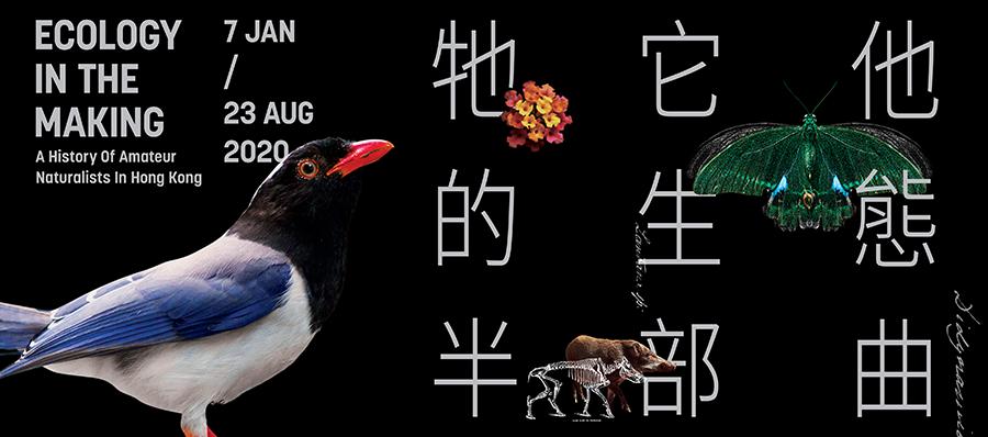 「牠它他的生態半部曲」主題展覽海報。(龍虎山環境教育中心提供)