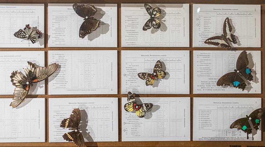香港首個蝴蝶名錄。(龍虎山環境教育中心提供)