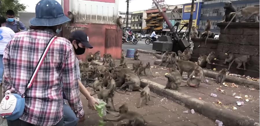 疫情衝擊無人餵 泰觀光猴群佔街頭打群架