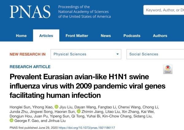 圖片:6月29日,刊登在《美國國家科學院院刊》(PNAS)的一項研究顯示,中國的研究人員發現了一種可能引發大流行病的新型豬流感病毒。(網絡截圖)