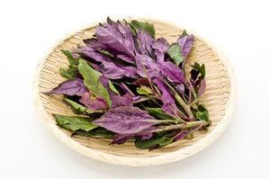 紅鳳菜是補血聖品? 還是致癌毒菜? 專家解開眾人的疑惑