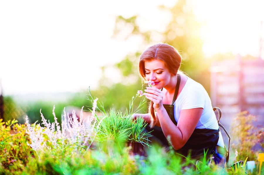 香草盆栽芳香迷人 購買及栽種七原則
