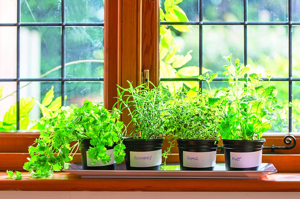 大多香草都喜歡明亮的陽光與排水良好的土壤。
