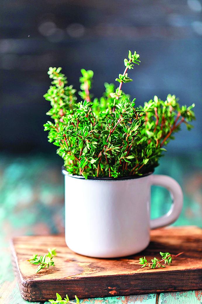 百里香屬於多年生草本植物